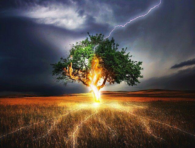 大木に雷が落ちる